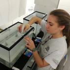 Lyan Padilla-Velez, an REU intern setting up lab study