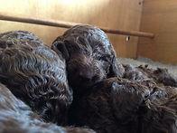 New Puppy Litter Cuddling