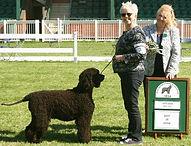Best In Show Irish Water Spaniel Dog