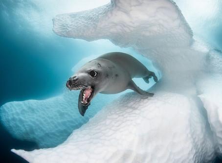 Жизнь по иным законам: подводный мир в работах призеров фотоконкурса Ocean Art 2019