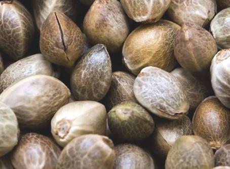 20 неординарных причин, чтобы употреблять конопляные семена