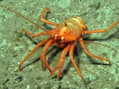 Новые виды живых существ обнаружены учеными и представлены на видео