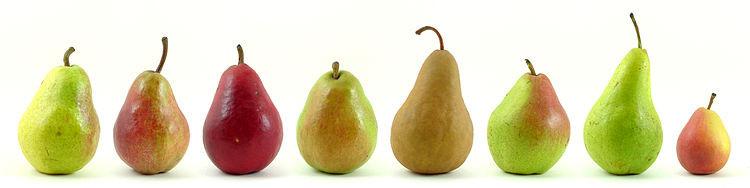 Poire, Pear, fruits, saison, nourriture, santé, nutrition,