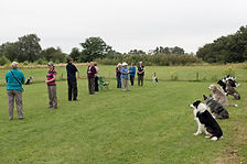 summer obedience camp - Copy.jpg
