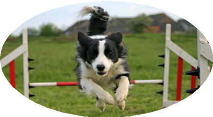 agility (2).png