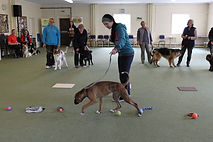 Fun day for pet club 101.JPG