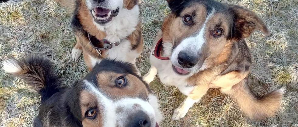 3 dogs in sit sue b.jpg