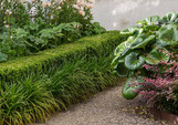 Hedging & strappy edging Liriope