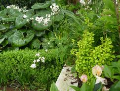 "Favourite plants - Berberis ""Maria"""
