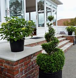 Box topiary spirals
