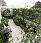 An architect's garden, pleached hedge, concrete paving, victorian villa, wellington