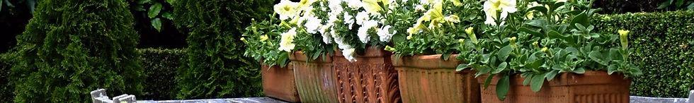 Container design in pots for apartments, balconies & terraces Welllington