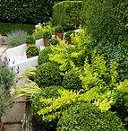 Plants in season, looking good & new releases