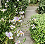 Modern Coastal Garden Seatoun
