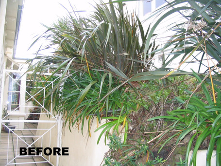 Before garden renovation