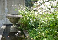 Classic concrete urn, water feature & Japanese Anemones