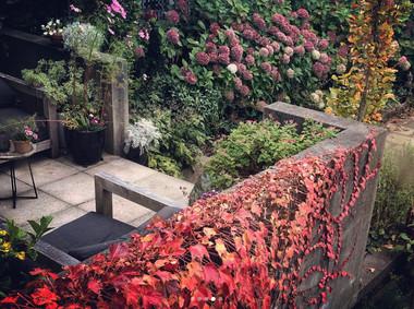 Autumn leaves & colour