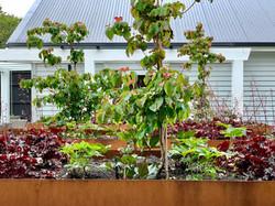 Large garden & landscape design in Karori Wellington