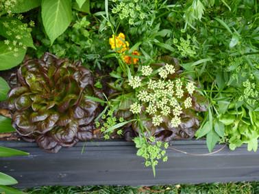 Decorative and edible vegetable garden