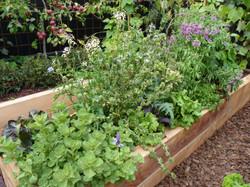 Companion planting in vege garden