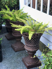 Planted with Foxtail Ferns