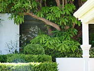 Layered hedges and topiary detailing under Rhododendron