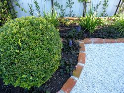 Boxwood | Buxus topiary balls:
