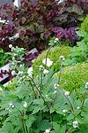 Beautiful planting design combinations,  garden designs inspiration ideas