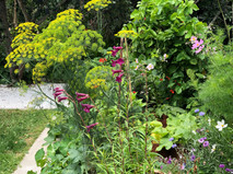 Gorgeous fennel and wild flowers planted with vegetables