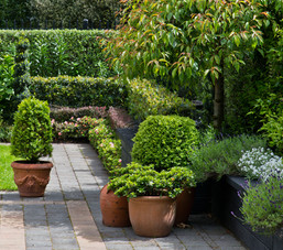 Topiary and layered hedges