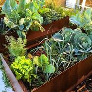 Corten steel vegetable planters