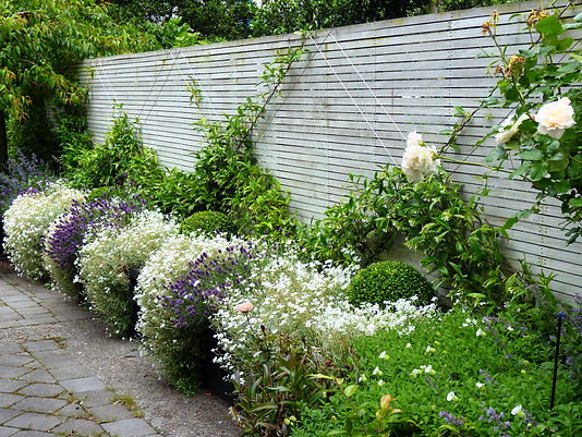 Something special - a stark border filled with billowing flowers and climbers