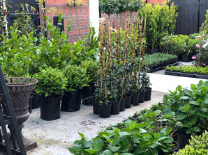 Plants in waiting, going into gardens and being delivered around New Zealand