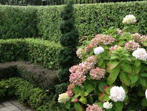 Cork screw spiral topiary - Irish Yew by HEDGE