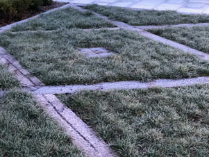 Grass patterns in the winter frost
