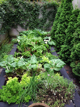 A cook's potager garden for Ray