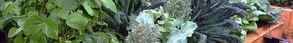 Award winning sustainable vegetable garden