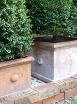 Topiaries in classic terracotta pots