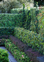 Layered hedges