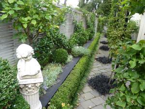 Greened up side garden