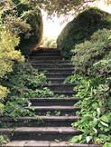 Steps through enchanted garden