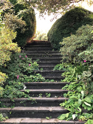 Steps through enchanted garden