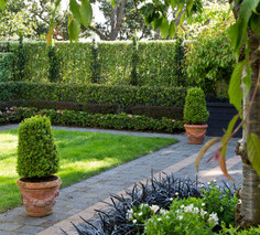 Formal hedging and columns of Irish Yew