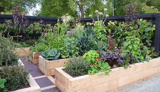 Vege Patch Pointers to create your dream garden