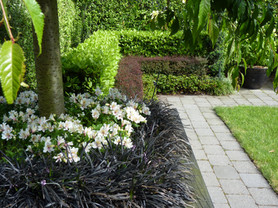 Layered hedges, mondo grass under weeping cherry trees