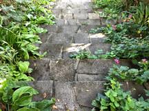 Stroll through the gardens ....