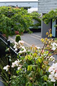 A view of the courtyard garden