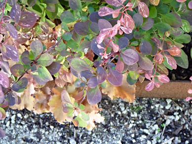 Rusty corten picking up the colours of the foliage
