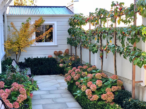 Thorndon Garden Wellington | HEDGE Garden Design & Nursery
