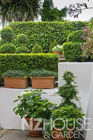 A corner arrangement of hydrangeas, ivy topiary, mondo grass & Buxus